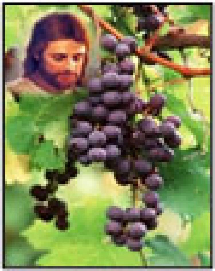 """""""Tinggal di dalam Yesus dan berbuah"""""""